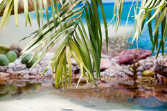 Tropical Sea with palm trees Stock Images