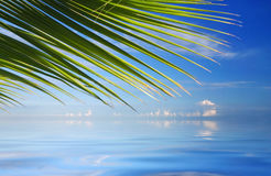 Tropical Sea with palm trees stock photo