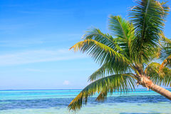 Tropical Sea Palm View Royalty Free Stock Image