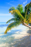 Tropical Sea Palm View Stock Images