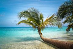 Tropical Sea Palm View Stock Photo