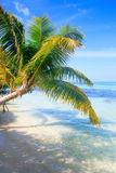 Tropical Sea Palm View Stock Image