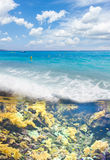 Tropical sea with reef  fishes Royalty Free Stock Images
