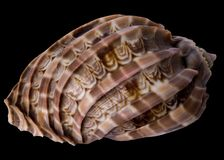 Tropical sea shell Royalty Free Stock Photos