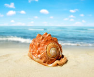 Tropical sea shell Royalty Free Stock Images