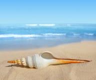 Tropical sea shell Royalty Free Stock Photo