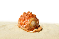 Tropical sea shell on the sand Royalty Free Stock Photography