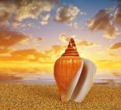 Tropical sea shell on sandy beach Stock Photography