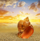 Tropical sea shell on sandy beach Royalty Free Stock Images