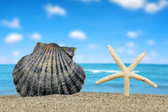 Tropical sea shell with starfish Royalty Free Stock Images