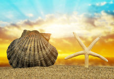 Tropical sea shell with starfish on sandy beach Royalty Free Stock Image