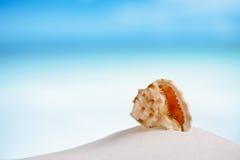 Tropical sea  shell on white Florida beach sand under the sun li. Tropical shell on white Florida beach sand under sun light, shallow dof Stock Photo