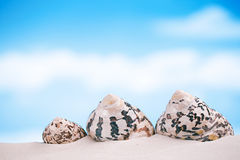 Tropical sea  shell on white Florida beach sand under the sun li Royalty Free Stock Photography