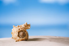 Tropical sea  shell on white Florida beach sand under the sun li Royalty Free Stock Photo