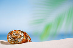 Tropical sea  shell on white Florida beach sand under the sun li Royalty Free Stock Images