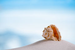 Tropical sea  shell on white Florida beach sand. Tropical shell on white Florida beach sand under sun light, shallow dof Stock Images