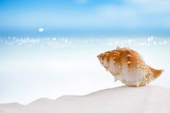 Tropical sea  shell on white Florida beach sand. Tropical shell on white Florida beach sand under sun light, shallow dof Stock Photos