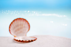 Tropical sea  shell on white Florida beach sand. Tropical shell on white Florida beach sand under sun light, shallow dof Royalty Free Stock Photography