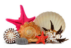 Tropical sea shells Royalty Free Stock Images