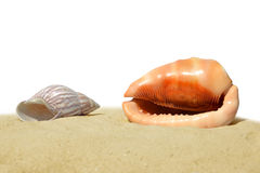Tropical sea shells on the sand Stock Photos