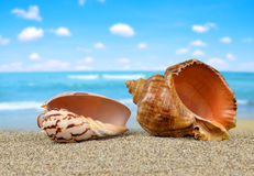 Tropical sea shells Stock Photo