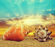 Tropical sea shells on sandy beach Stock Photo