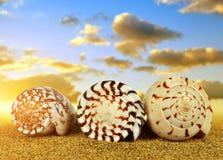 Tropical sea shells on sandy beach. Tropical sea shells on sandy beach at sunset Stock Image