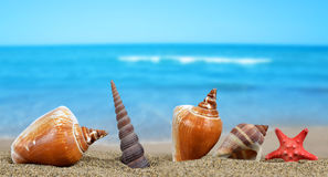 Tropical sea shells with starfish Royalty Free Stock Photos