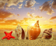 Tropical sea shells with starfish Stock Images