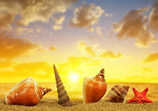Tropical sea shells with starfish on sandy beach Stock Photography