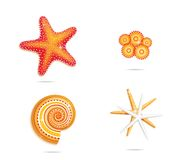 Tropical sea stars symbols set Stock Photos