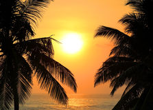 Tropical sea sunset and palms Stock Photos