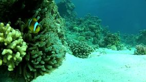 Tropical sea. Underwater coral reef red sea. stock video