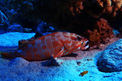 Tropical sea view with unusual fish Royalty Free Stock Photos