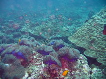 Tropical seabed. Colorful tropical marine life on the seabed royalty free stock photography