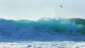 Tropical seabird soars over Pipeline surf. Beautiful backlit wave at Pipeline.   Translucent blue-green ocean walls of water, with tropical  birds riding the Stock Image
