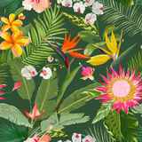 Tropical Seamless Floral Summer Pattern. For Wallpapers, Backgrounds, Textures, Textile, Cards. Royalty Free Stock Photos