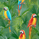 Tropical Seamless Parrot and Floral Summer Pattern. For Wallpapers, Backgrounds, Textures, Textile, Cards. Royalty Free Stock Images