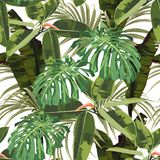 Tropical seamless pattern background with bright palm monstera leaves, ficus, jungle leaf. White background vector illustration