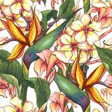 Tropical seamless pattern with exotic flowers. Royalty Free Stock Photography