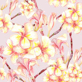 Tropical seamless pattern with exotic flowers Stock Photo
