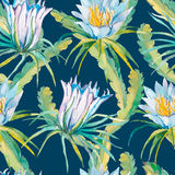 Tropical seamless pattern. Exotic leaves and flowers. Vector.Dragonfruit, pitaya,pitahaya. Flowers pitaya. Stock Photos