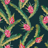 Tropical seamless pattern. Exotic leaves and fruit. Vector.Dragonfruit, pitaya,pitahaya. Pitaya is the plant in Stock Photo