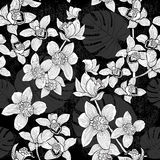 Tropical seamless pattern with orchids and palm leaves. Monochro Stock Photos