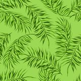 Tropical seamless pattern. Palm leaves of coconut tree royalty free illustration