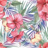 Tropical seamless pattern. Palm leaves and hibiscus.Hand draw watercolor illustration Stock Images