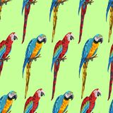 Tropical seamless pattern with parrots. Hand drawn exotic birds vector illustration