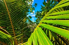 Tropical seascape Stock Image