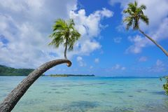 Tropical seascape coconut palm trees over water. Tropical seascape two coconut palm trees lean over clear water with cloudy blue sky, French Polynesia, Huahine royalty free stock photography