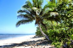 Tropical seascape . Sea sand sun and palm trees . Royalty Free Stock Photography